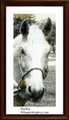 """Big Boy"" Palamino, Arabian & Thoroughbred."