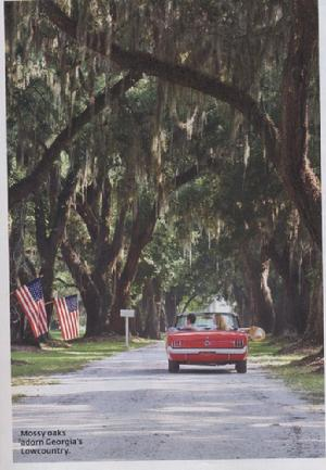 Fenwick Hall Historical District, Southern Living Magazine, Victor Morawetz, John Hauser, Horses of Fenwick, Legends of Fenwick, Charleston Plantations, Endangered spieces, Wood Storks, Deer, Wild Turkey, 1966 Red Mustang, LuLu