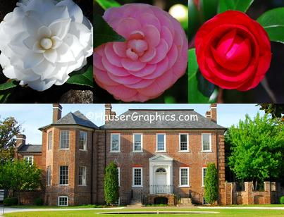 Camellias of Fenwick, Charleston Camellia Society, Historical Houses of America, National Landmark, old plantation, Centinel, Shadow, Flimnap, Godolphin, horses, wood stork