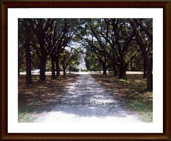 Fenwick Castle Oak Alley 1970, ghost, headless horseman, stono river ferry, penny creek,