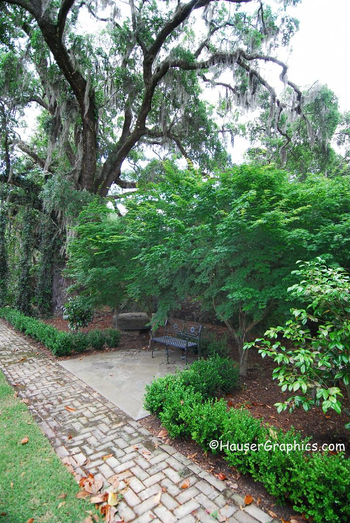Boxwoods, Japanese Maples, at Fenwick Hall, Stono River, Johns Island, SC, Charleston, Hauser, ancient oaks,