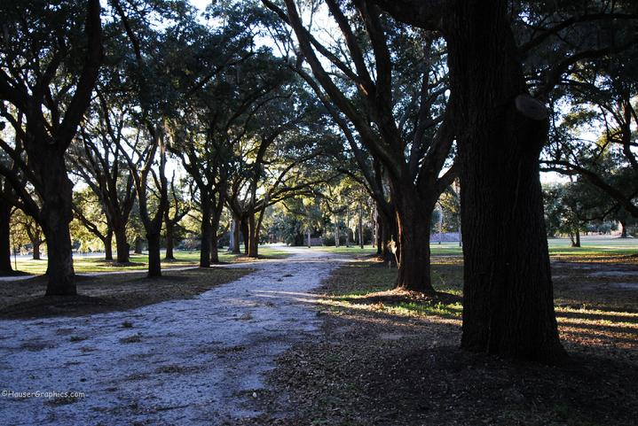 Fenwick Estate on John's Island. View of the younger, oak allee off Maybank Highway, John's Island, SC